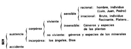 (ver imagen del árbol lógico de Porfirio)